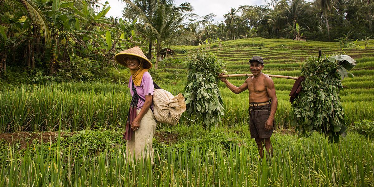 zdravé potraviny z Indonézie